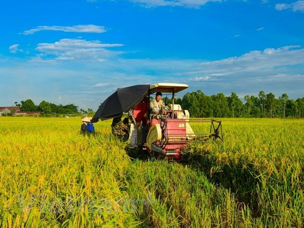 A rice field in the Mekong Delta (Photo: VNA)