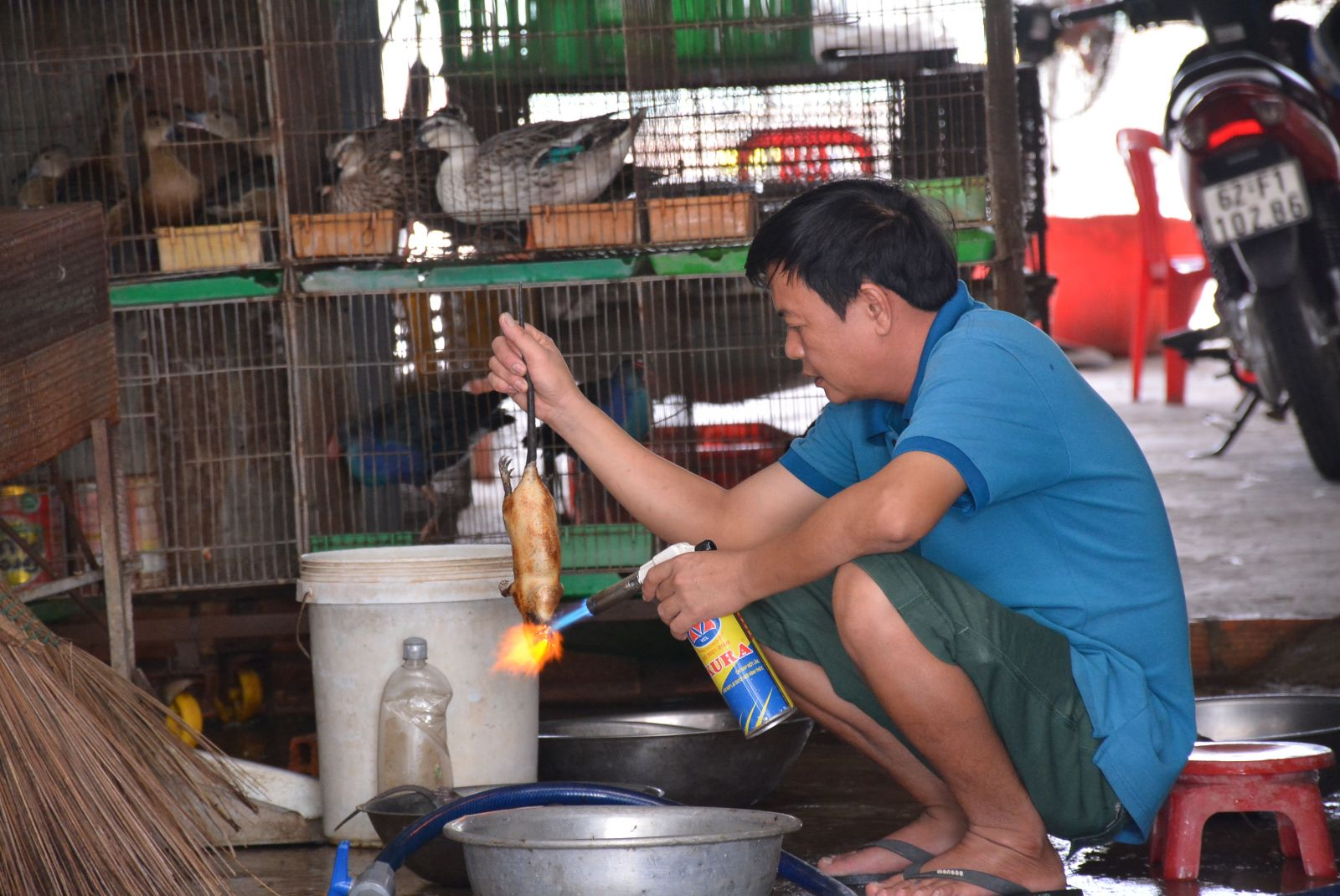 Presently, Thanh Hoa Agricultural Product Market has 31 households trading wildlife animals