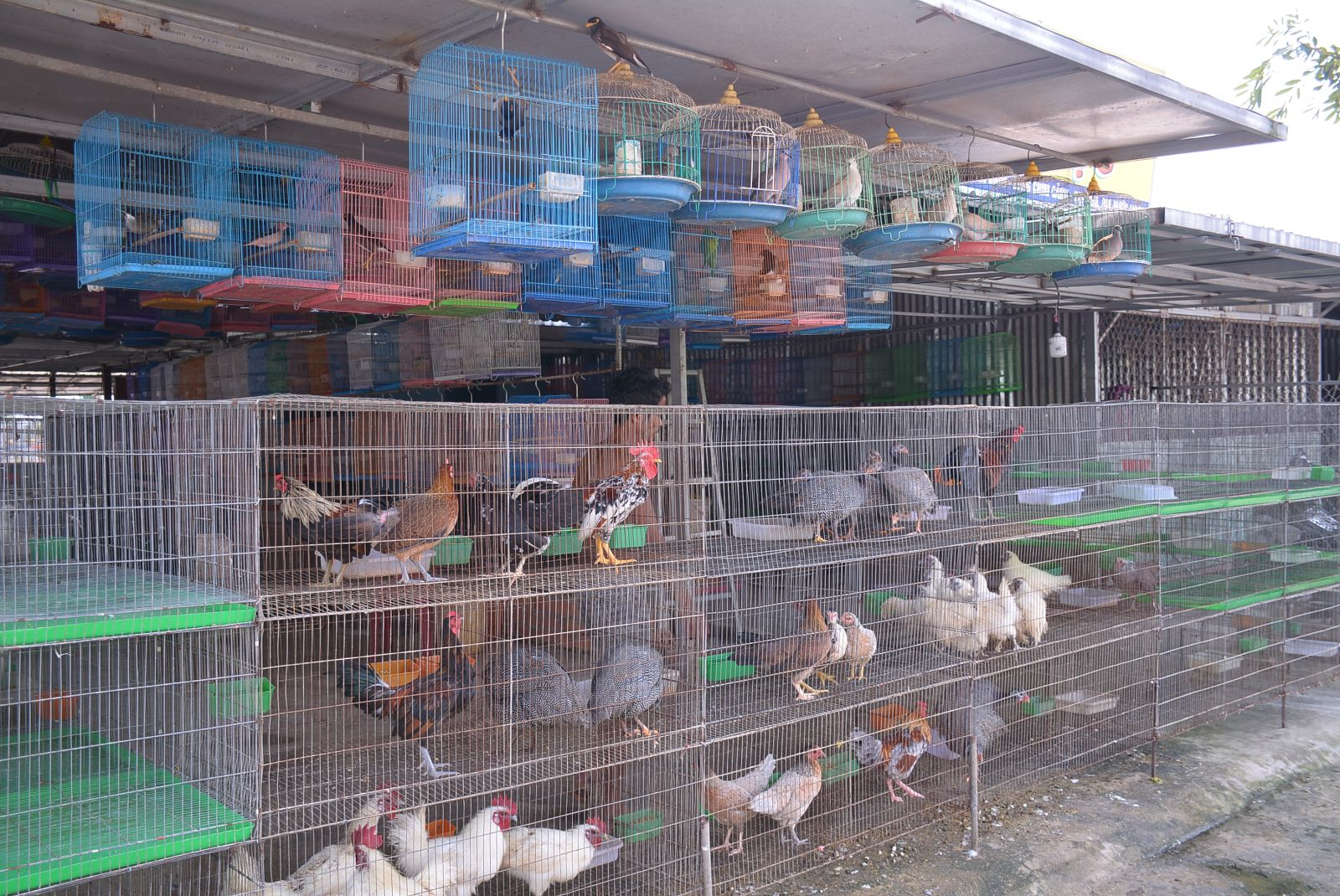 According to functional sectors, the most difficult task is to check for all kinds of ornament birds, this is also a problem in the inspection and handling process.